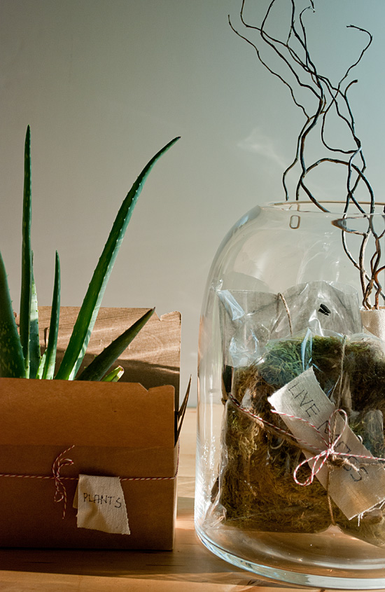 Peter Hoang & Nerissa Goco : Terrarium Kit